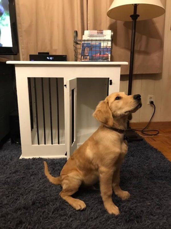 Golden retriever sitting next to custom made white single dog kennel